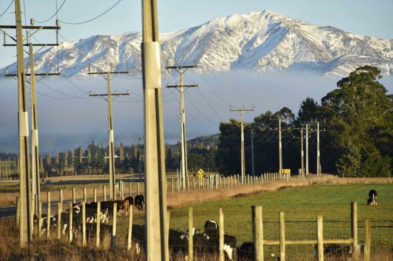 牧場にいる牛たちと後方に広がる山々