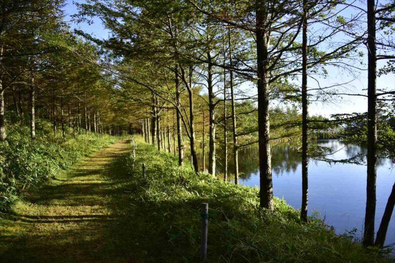 清里高原ホテルの近くにある静かに佇む美し池