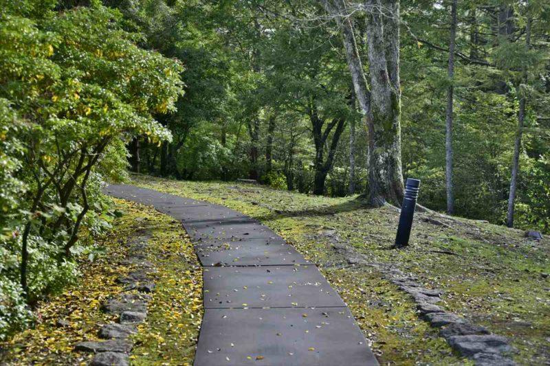 森に囲まれた遊歩道の風景